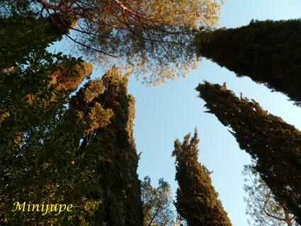 toscane,cyprès,sienne,le crète,campagne,nature,arbre